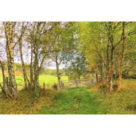 Other - Autumn at Birch Lane