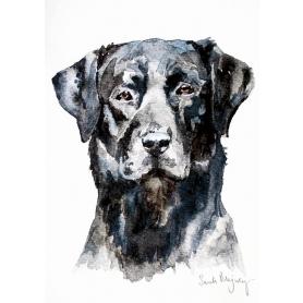 Animals Dog - Black Labrador