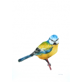 Animals Bird - Blue Tit