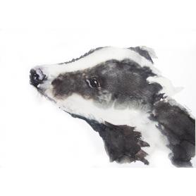 Animals Badger - Broc