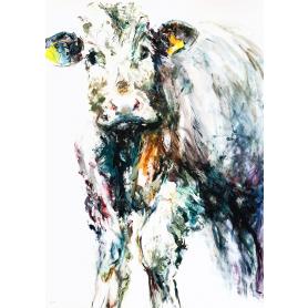 Bull Calf 2019