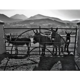 Co Down - Mourne Donkeys