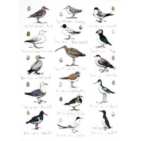 Coastal Birds II