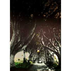 Co Antrim - Dark Hedges