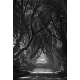 Co Antrim - Dark Hedges Mist Clearing Mono
