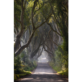 Co Antrim - Dark Hedges Mist Clearing Colour