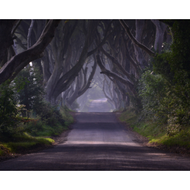 Co Antrim - Dark Hedges Morning Mist