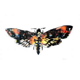 Animals Insect - Death Head Hawk Moth
