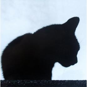 Lucky Black Cat In Black