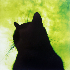 Lucky Black Cat In Green