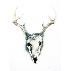 Animals Deer - Skull