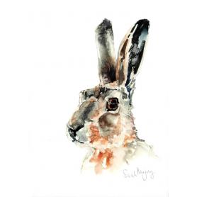 Animals Hare - Dillon