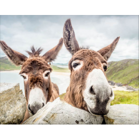 Donegal - Donkeys