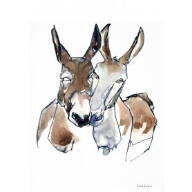 Animals Donkey - Donkeys In Colour