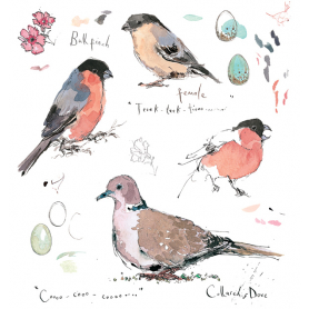 Sketchbook - Bullfinch and Collared Dove