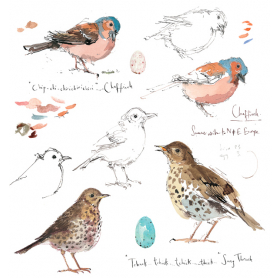 Sketchbook - Chaffinch and Song Thrush