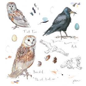 Sketchbook - Barn Owl and Rook