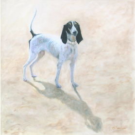 French Hound (Ariegeois)