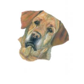 Bell Labrador