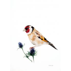 Animals Bird - Goldfinch