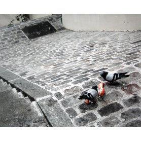 Paris In Grey Cobblestones And Pigeons