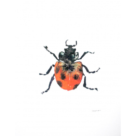 Animals Insect - Ladybird