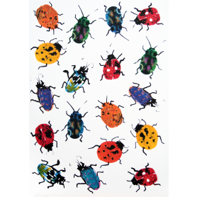 Animals Insect - Ladybirds