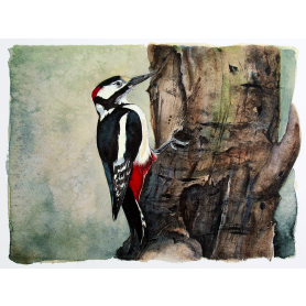 The Lost Spells - Great Spotted Woodpecker
