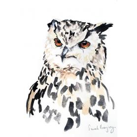 Animals Bird - Night Owl