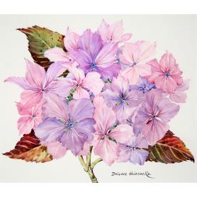 Pink Autumn Hydrangea