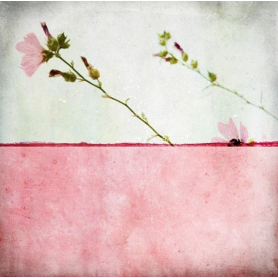 Pole Rose