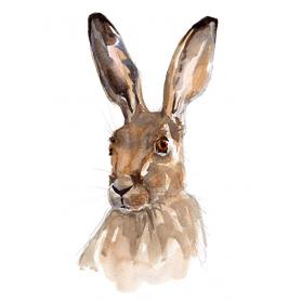 Animals Hare - Hare