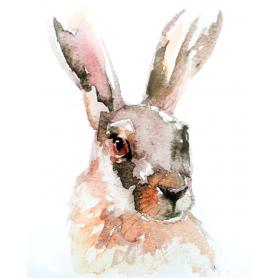 Animals Hare - Irish Hare