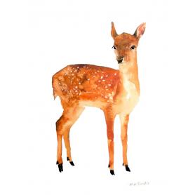 Animals Deer - Little Fawn