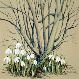 Snowdrops By The Birch