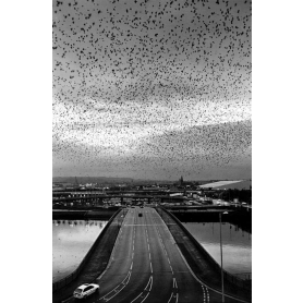 Digital Print - Starlings 1997