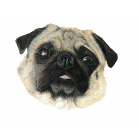 The Stare, Pug