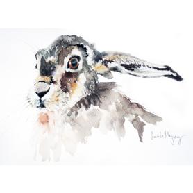 Animals Hare - The Watcher