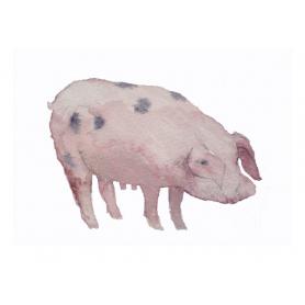 Animals Pig - This Little Piggy