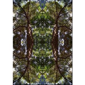 Tranquillitree
