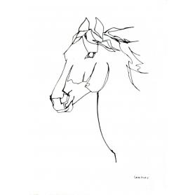 Animals Horse - Wild Horse