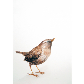 Animals Bird - Wren